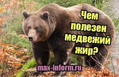 фото Чем полезен медвежий жир