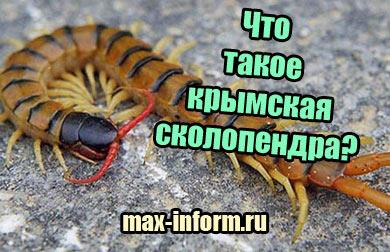фото Что такое крымская сколопендра, чем опасна для человека